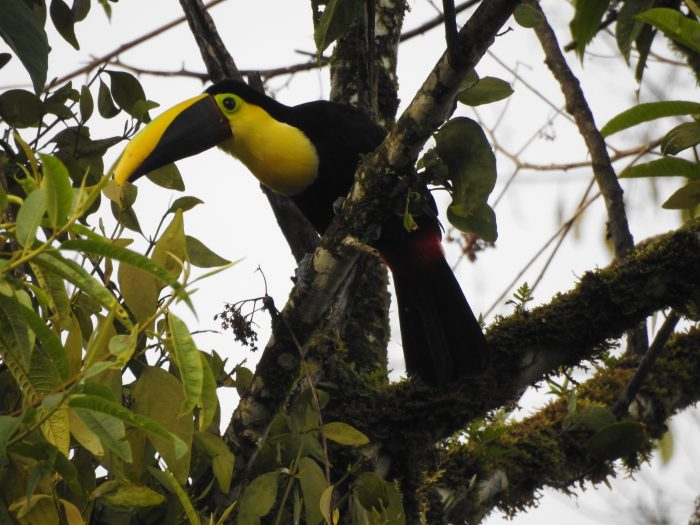 Mindo Birdwatching