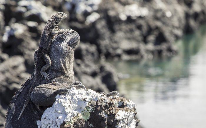 Diving Galapagos Islands